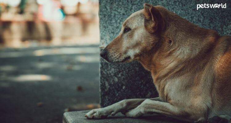 Healthy Foods for Indian Street Dogs