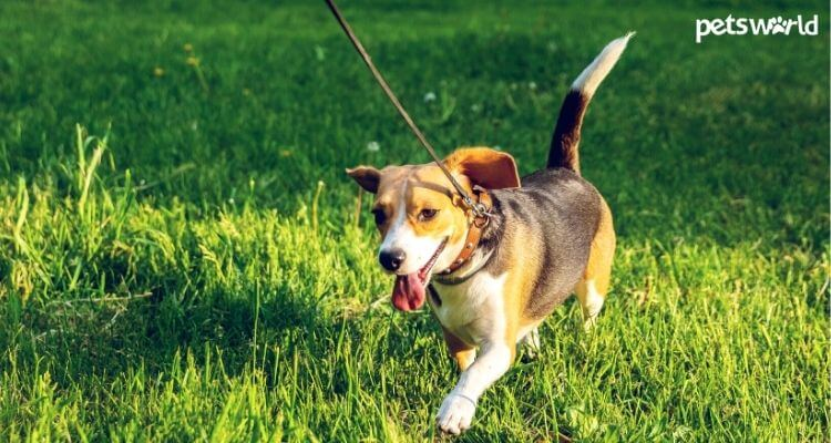 How Long Should Puppies Go For A Walk?