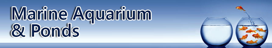 Marine Aquariums & Ponds