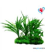 Petsworld Lilaeopsis With White Flower