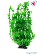 Aqua Geek Bacopa Moneri Aquarium Plant (Large)