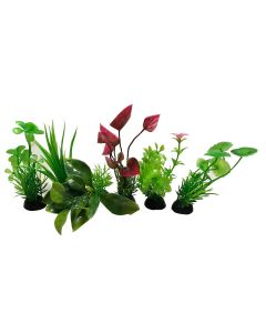 Aquatic Plant Variant Small Leaves For Aquarium Decoration