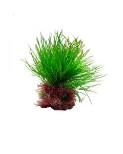 Aquatic Plant Green Red Grass For Aquarium Decoration