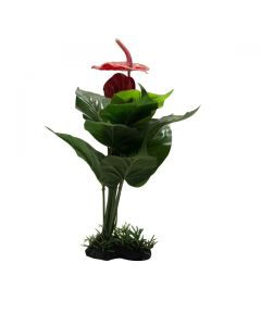 Aquatic Plant Big Leaves & Flower For Aquarium Decoration