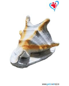 Aqua Geek Aquarium Decoration Shell