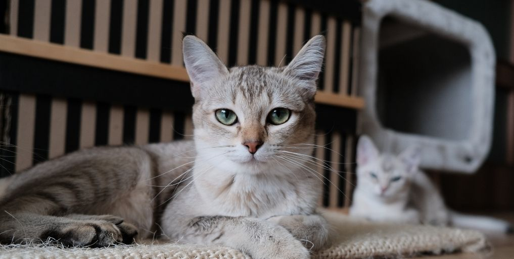 Keep Your Pet Cats Healthy and Happy